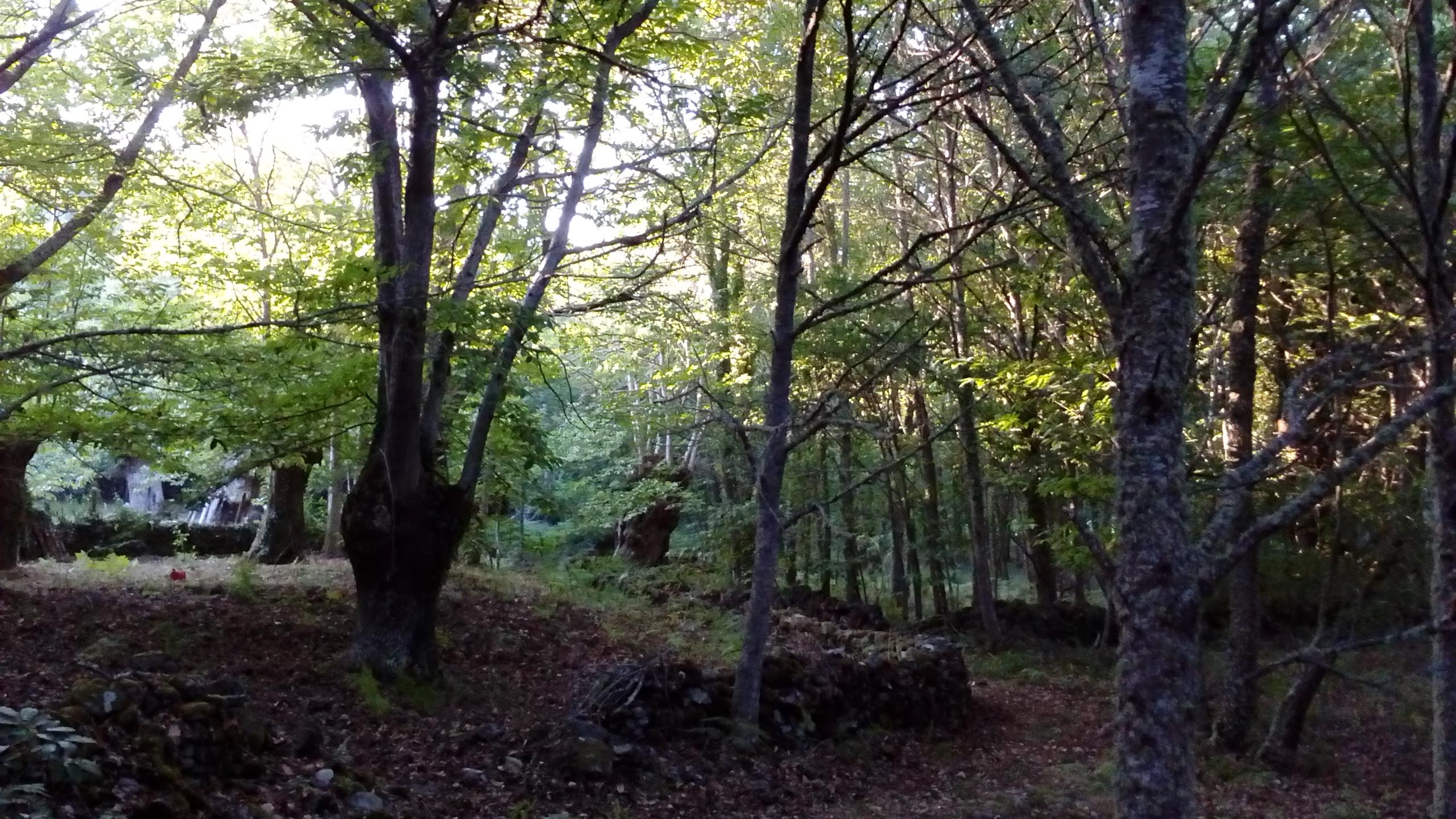 Nuestros bosques en otoño